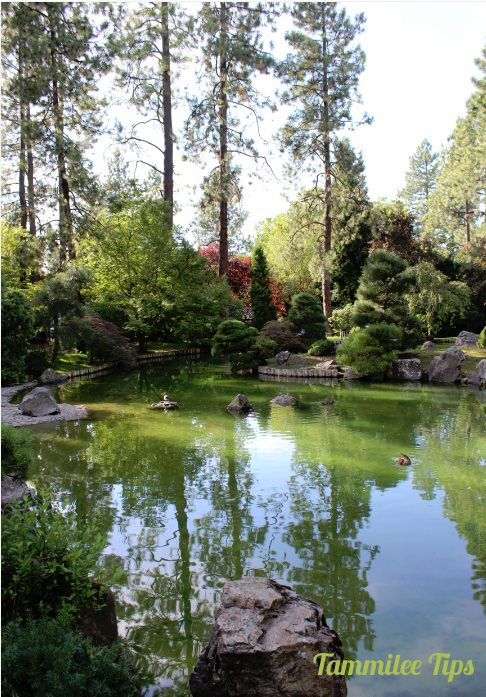 344 Best Pond And Waterfall Images On Pinterest Waterfalls Japanese Gardens And Ponds