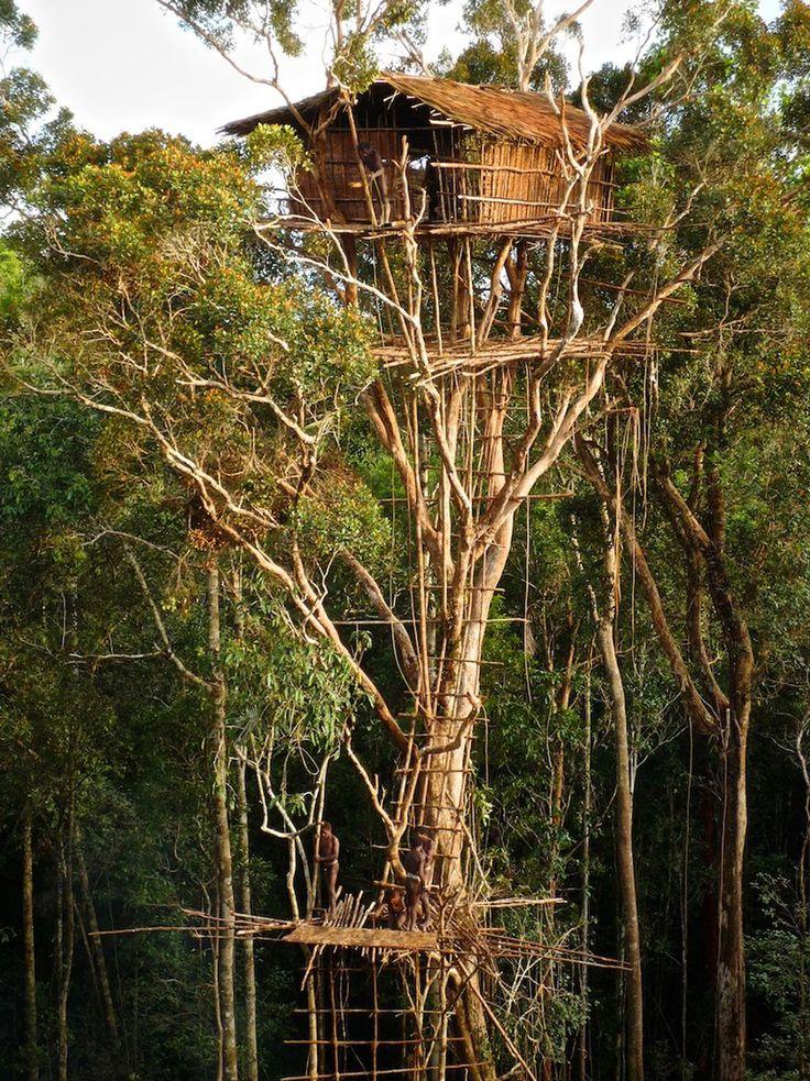 Casa na árvore em Irian Jaya, na Indonésia