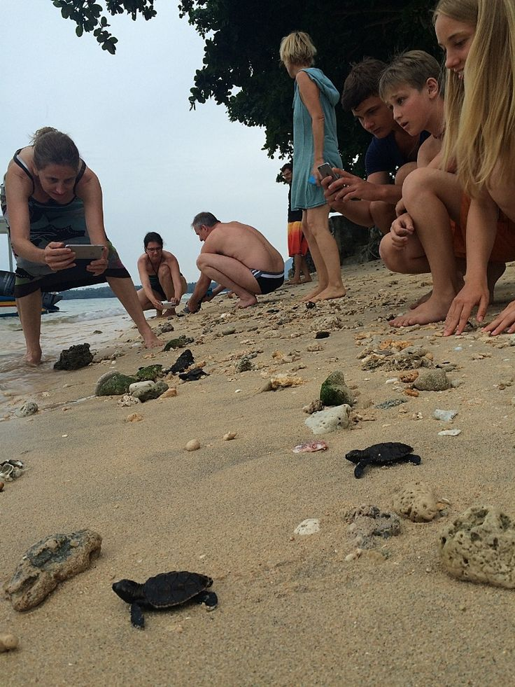 Onong Resort Siladen . Baby Turtle Release . Celebes Divers