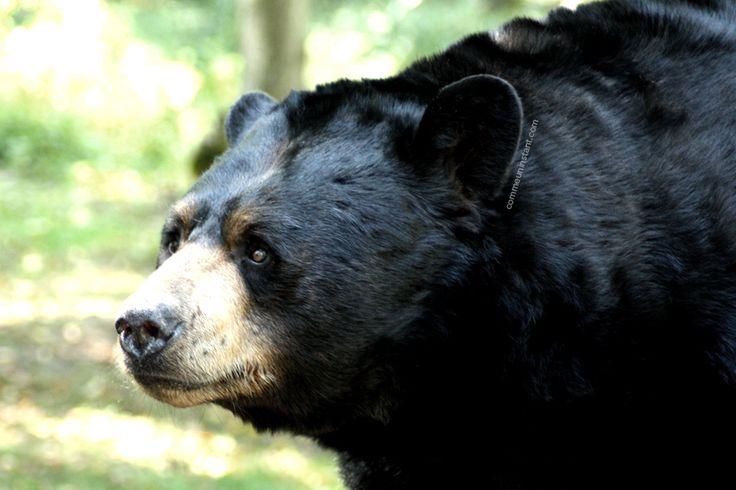 Animaux  * Ours http://www.commeuninstant.com/galerie/faune-et-flore/animaux/jardin-animalier