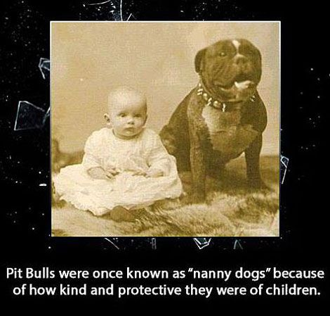 Pit bulls were once known as Nanny Dogs. I don't even care if this is historically accurate, it should be!!