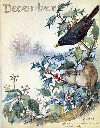 December A blackbird, robins, hedge sparrows, blue tit with ivy and holly. by Edith Holden