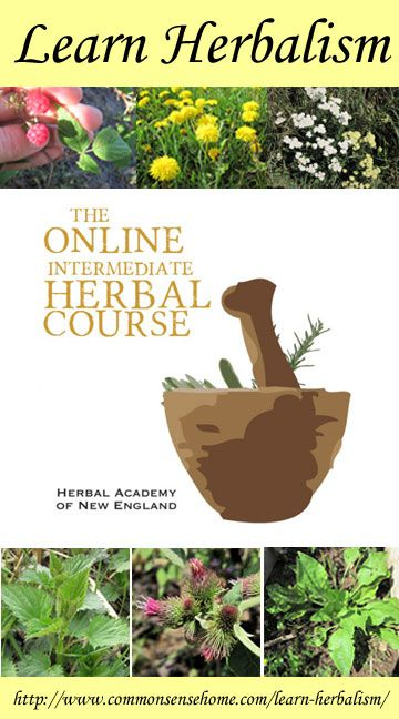 Learn Herbalism with the Herbal Academy of New England @ Common Sense Homesteading