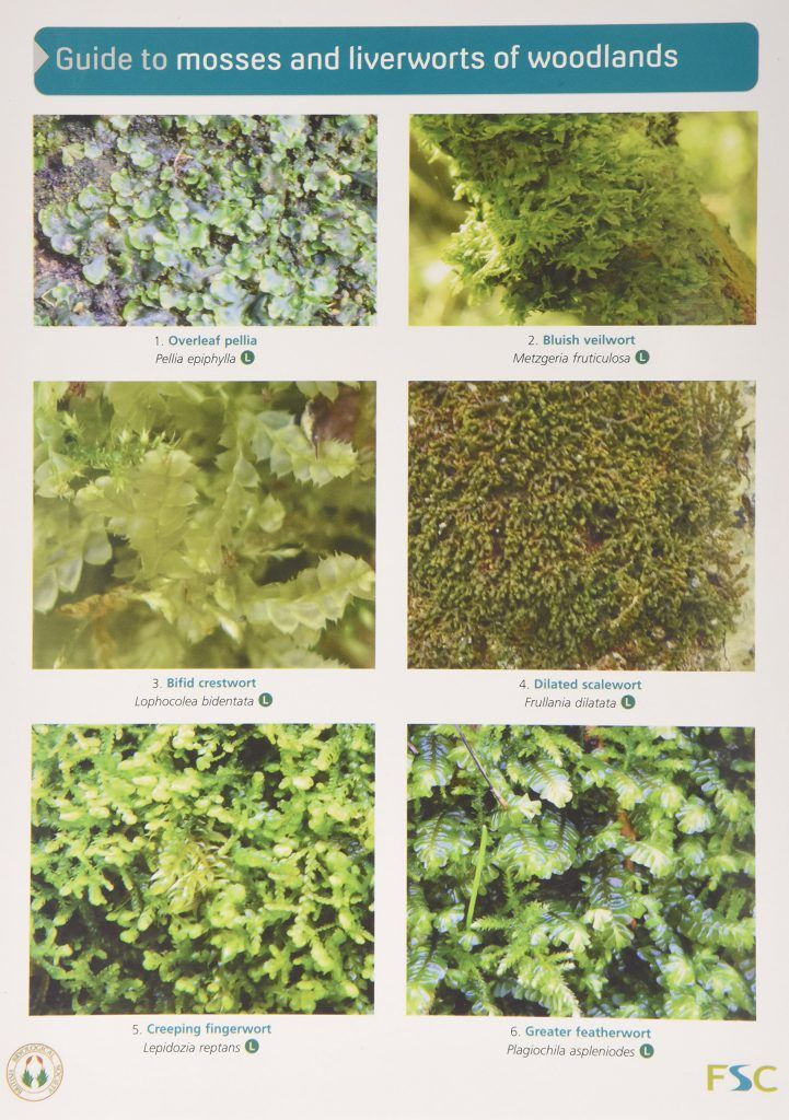 mosses-and-liverworts
