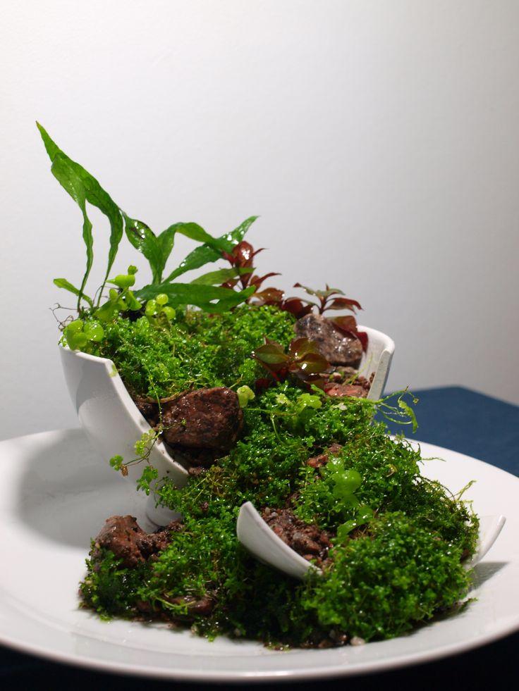 les 229 meilleures images du tableau terraria vivaria sur pinterest aquascaping terraria et aga. Black Bedroom Furniture Sets. Home Design Ideas