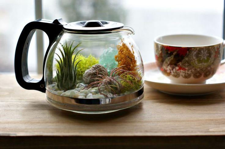 Com uma pequena cafeteira antiga e plantas suculentas você é capaz de fazer um lindo terrário de plantas a baixo custo.
