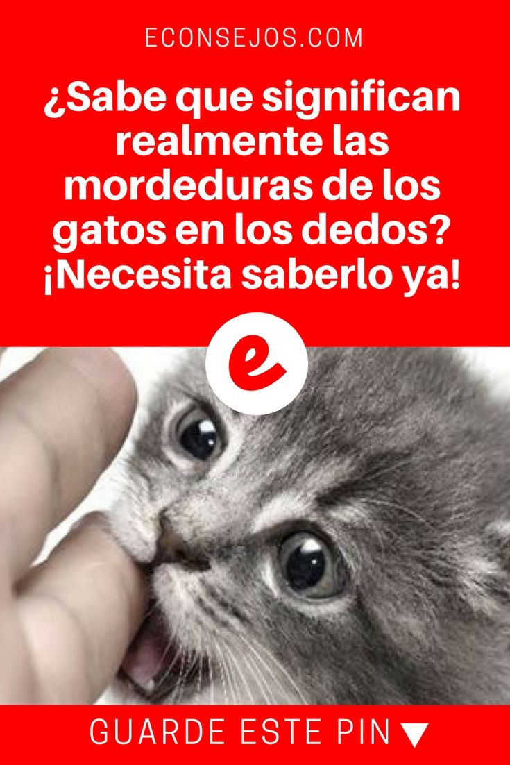 Sabes Qué Significan Las Mordeduras De Los Gatos En La Mano Descubre Si Tu Gato Te Quiere Gatos Gatos Y Perros Lindos Informacion De Gatos