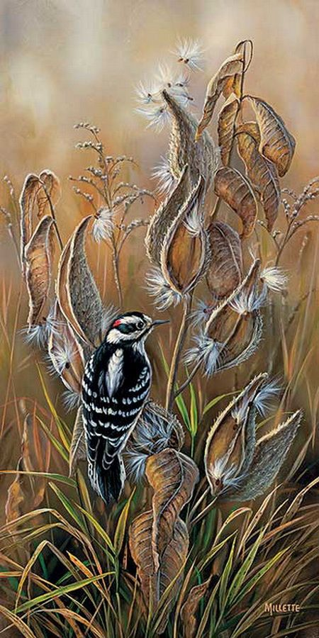 """""""Downey Woodpecker with Milkweed"""" by Rosemary Millette"""