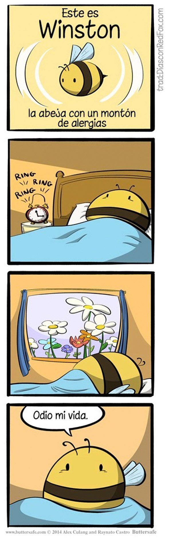 la abeja al rgica humor e im genes divertidas pinterest humor memes and funny stuff