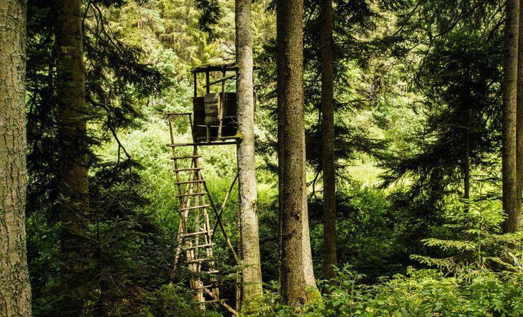 Jagd und Forst Hand in Hand: Morgen tritt das neue Jagdgesetz in Kraft