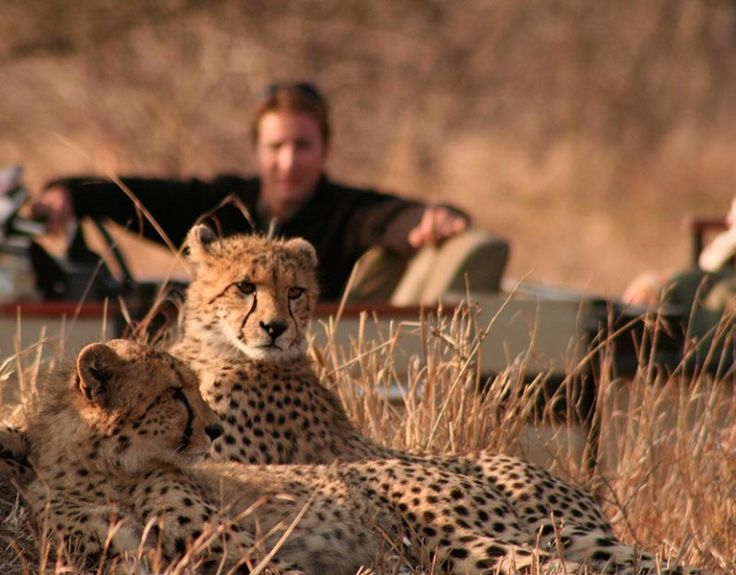 From early morning to evening game drives, you will not be disappointed at the exceptional game viewing Tintswalo Safari Lodge offers! Chat to our friendly @mtbeds team on 0860 119 119 to book your #mtbedsLuxuryTravel getaway.