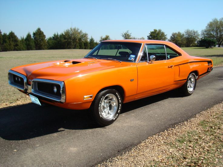 1000 Images About Super Bee On Pinterest Beautiful