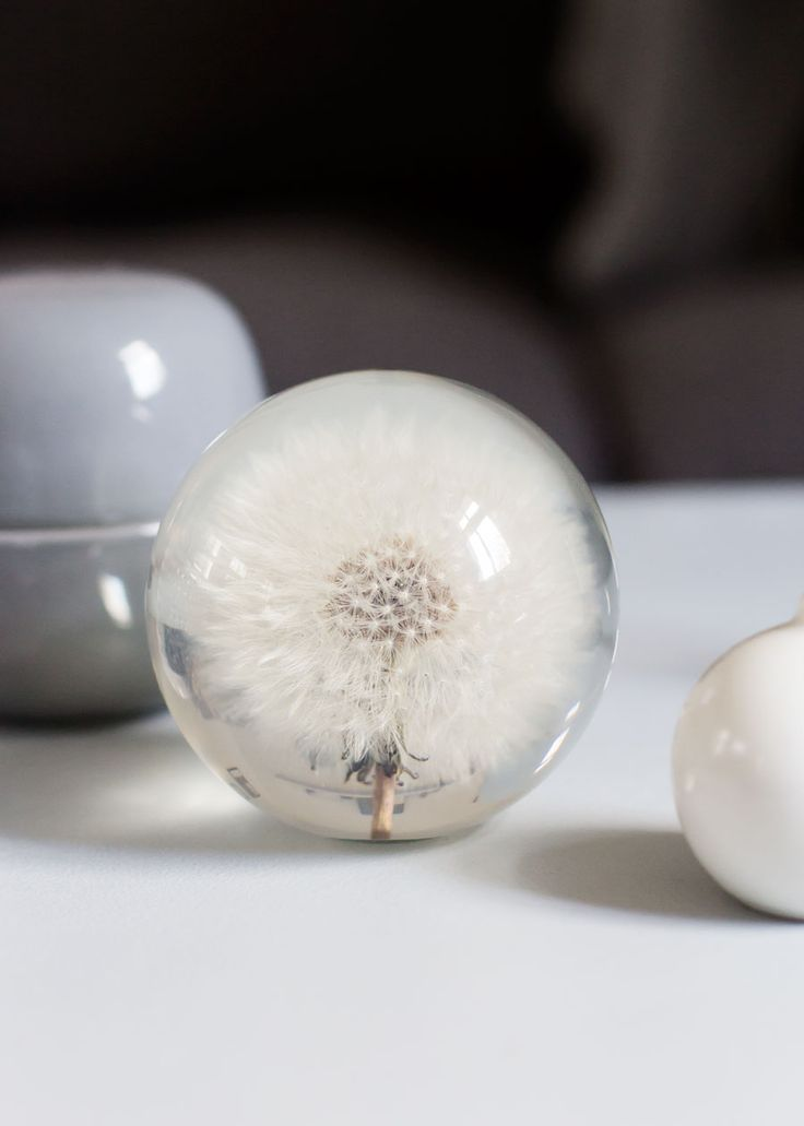 Dandelion paperweight in the shop