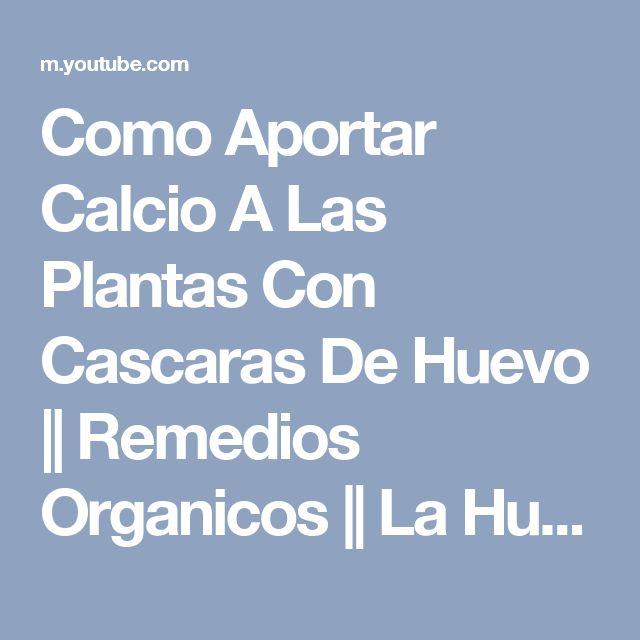 Como Aportar Calcio A Las Plantas Con Cascaras De Huevo || Remedios Organicos || La Huertina De Toni - YouTube