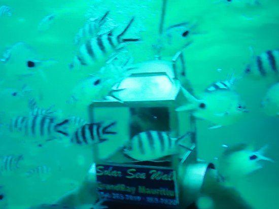 Photo of Solar Under Sea Walk