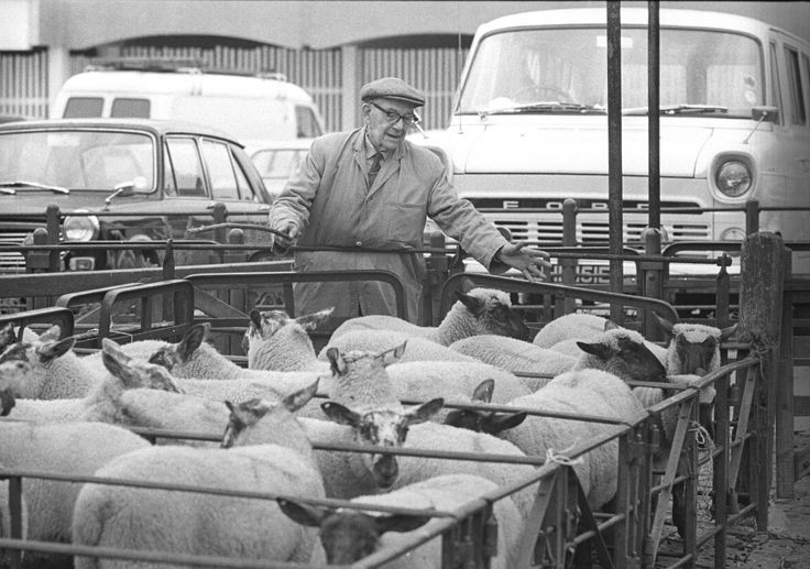 King's Lynn, final cattle market on old site, June 29, 1971.