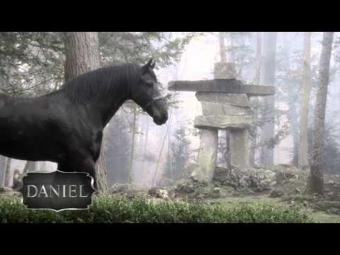 Meet The Horses - Behind the Mask Friesian - Horses