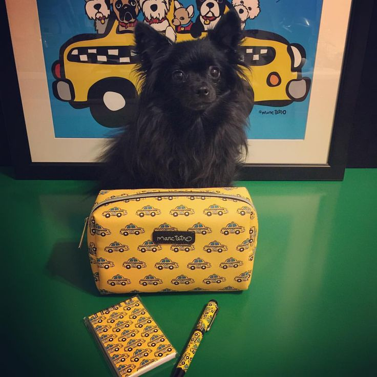 An early #ChristmasGiftToMyself with these #taxi items by @marctetro. #GigabyteTheDog #MarcTetro #pomchi #pomeranian #chihuahua #chipom #doglover #SmallDog #Dog #PetParent #blackdog #MixedDog #taxipen #taxinotebook #taximakeupbag #myfavoritethings...
