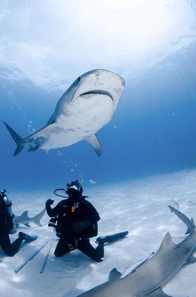 Shark Diving!!!