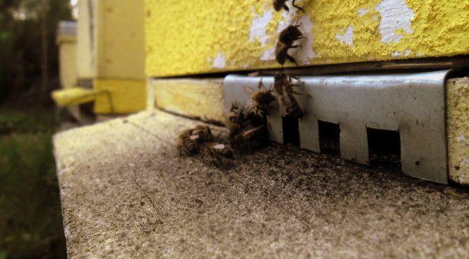 abelhas23