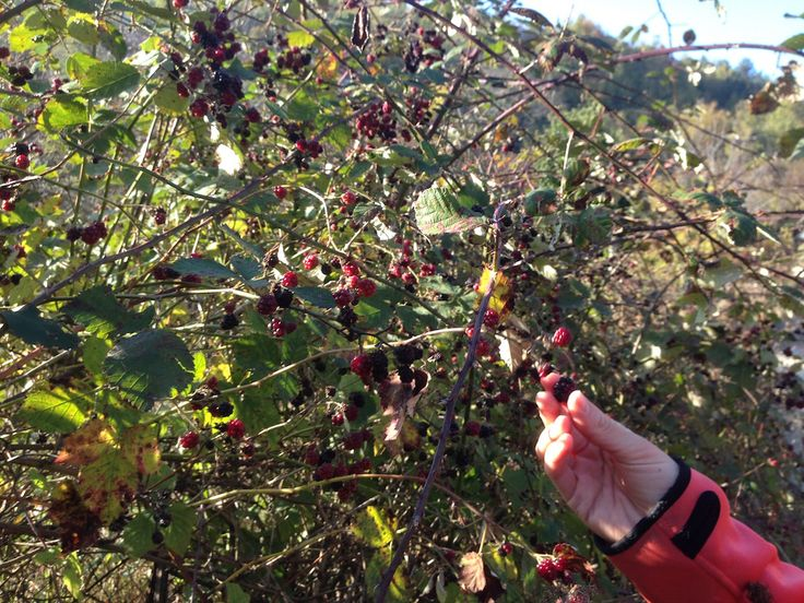 taste fruits directly from the trees in trigiro tours - Greece #trigiro #tour #food #foodTasting #nature #northGreece #Greece #travel