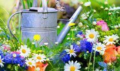 Blumenwiese mit Blüten Welche Blüten kann ich essen?  Viele Blüten sind essbar, die eigentlich Ziergewächse sind. Am besten werden die Blüten natürlich im eigenen Garten geerntet. Dort sind sie garantiert frei von Spritzmitteln. Spezialisierte Märkte verkaufen aber ebenfalls ungespritzte Blüten. Ein Trend, der hoffentlich noch weiter geht!  Diese Blüten können gegessen werden:      Rosen     Vogelmiere     Huflattich     Veilchen     Vergissmeinnicht     Ringelblumen     Salbeiblüten…