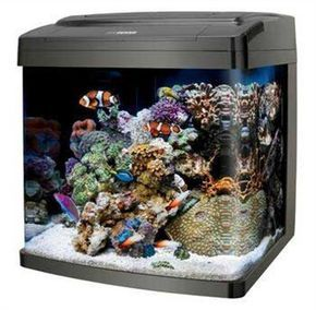 Saltwater Aquarium Beginner Guide - Saltwater Aquarium Online Guide