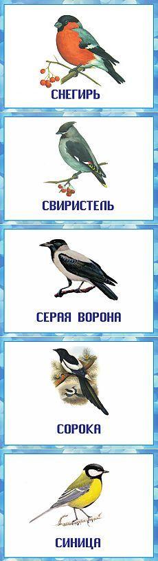 Зимующие птицы.) Дидактические карточки.