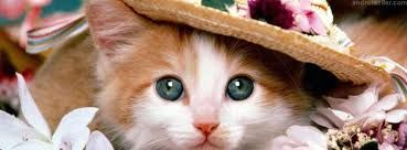sevimli kediler ile ilgili görsel sonucu