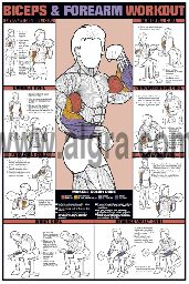 Biceps and Forearm Workout Poster