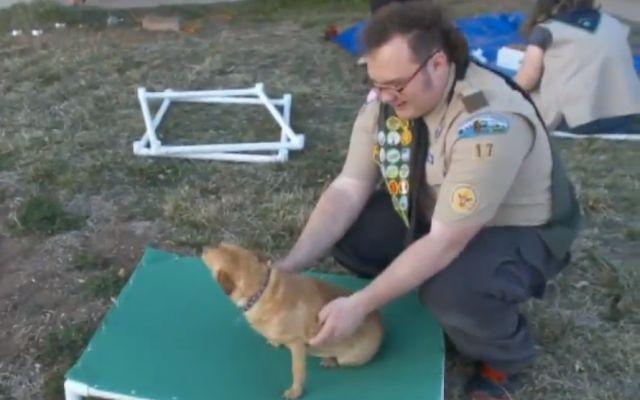 Newborn Beagle Puppy Barks In Sleep Entire World Melts Homeless