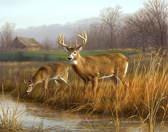 Down By The Creek - whitetail deer painting by Jim Hautman