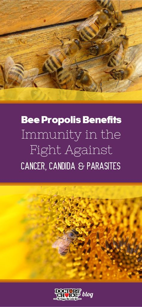 Bee Propolis Benefits Immunity in the Fight Against Cancer
