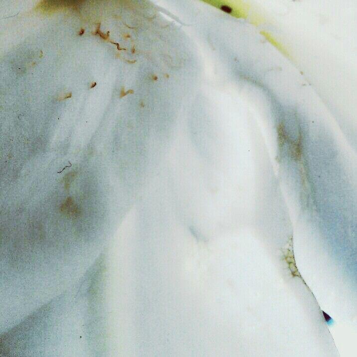 Lily petals - NicFrances EyeEm