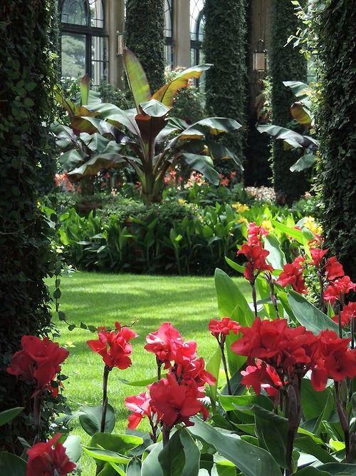 Tropical garden                                                       …