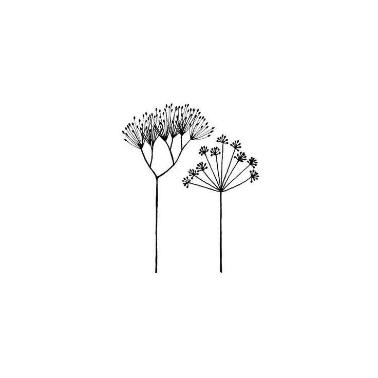 Parsley & coriander seed heads illustration.  #illustration #sketch #botanical