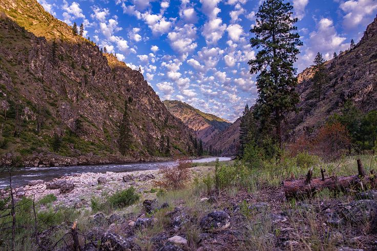 A Middle Fork afternoon. | Photo: Jon Webb. Salmon River, Idaho