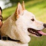 Queda de pêlo em cachorro, coceira, alergia e parasitas - Dicas importantes