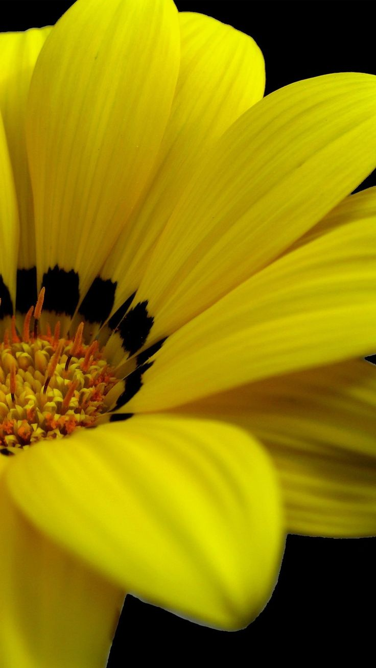 Yellow Flowers iPhone 6 Plus Wallpaper 14146 - Flowers iPhone 6 Plus Wallpapers