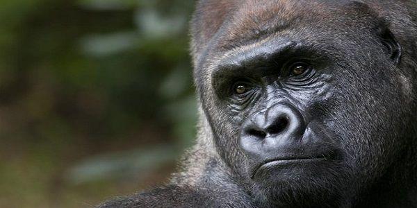 Οι πίθηκοι βρίσκονται απροσδόκητα πιο κοντά στην ανάπτυξη ικανότητας ομιλίας