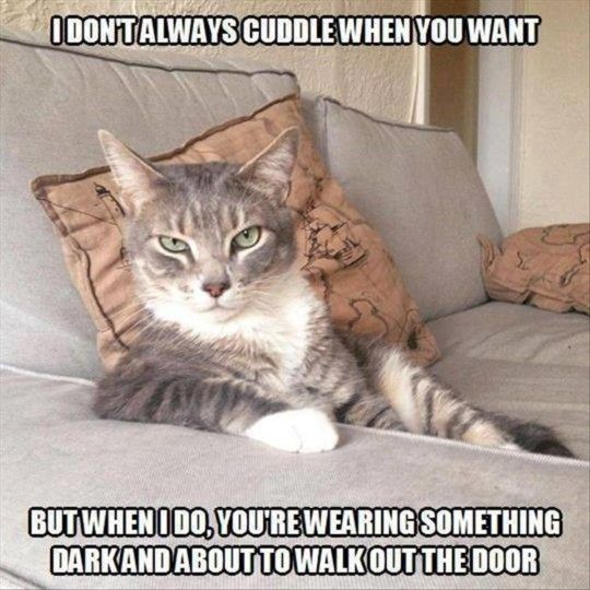 Only cat people would understand...