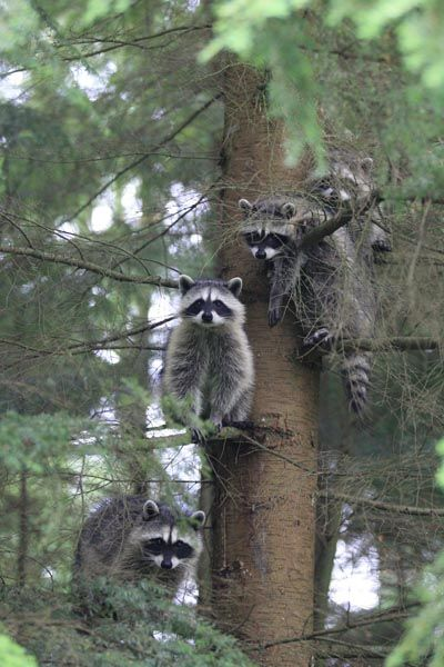 """They only look cute from a distance, you walk up to these coons and they will rip your head off. Always remember the movie """"Elf."""" Somebody needs a hug? No. NEVER!"""
