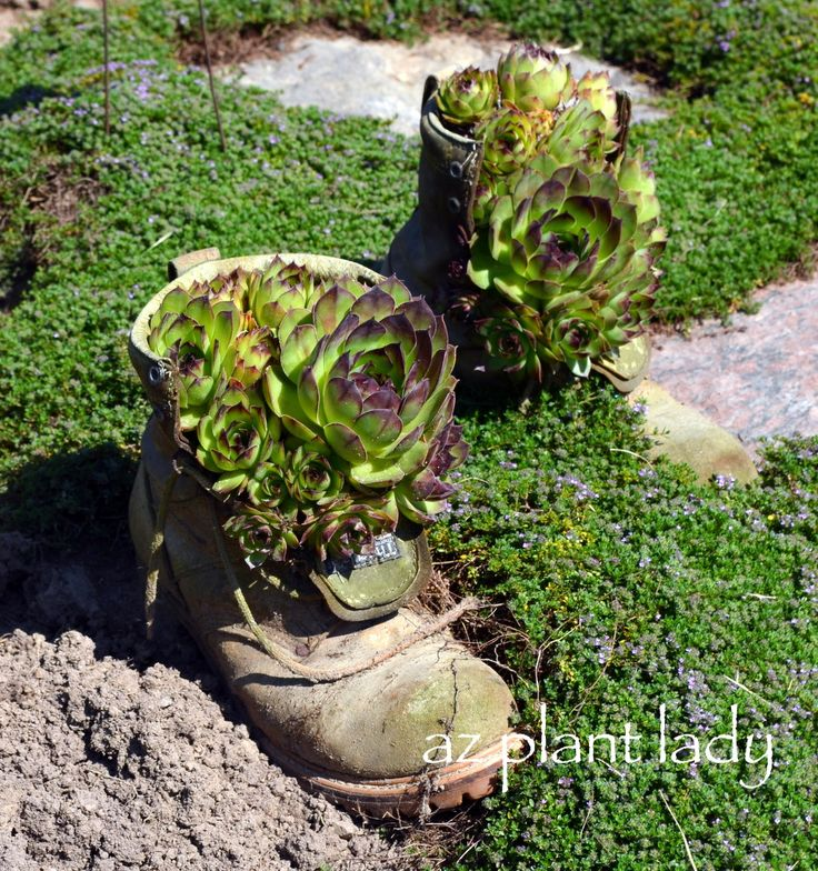 Fun, Innovative Containers for Your Favorite Plants-birdsandbloomsblog.com: Planter Ideas, Container Gardens, Garden Ideas, Gardening Ideas, Rustic Garden, Boots Garden, Boots Planters, Container Gardening, Boot Planters