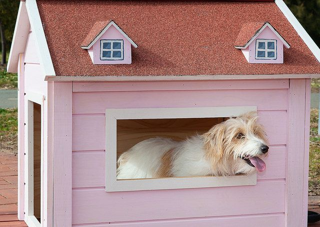 Pretty in Pink - Phoebe admires the view from her RitzPetz dog house