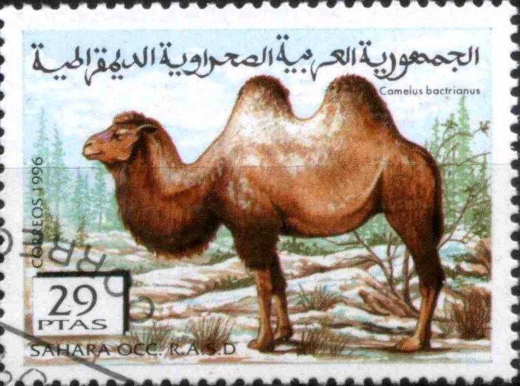 Stamp: Camelus bactrianus (Cinderellas) (Sahara Occ.) Col:EH 1996083