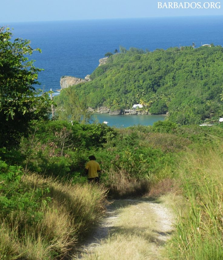 The Barbados National Trust free Sunday hikes are a fantastic way to explore the hidden treasures & natural beauty of the island....