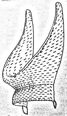 Ганди: рогатая кичка как сделать