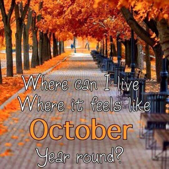 Autumn Leaves, Autumn Fall, Autumn 2017, Fall Quotes, Autumnal Equinox,  Fall Season, October Fall, Fall Things, Thanksgiving