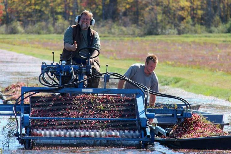 Days Out Ontario | Muskoka Fall at the Bala Cranberry Festival