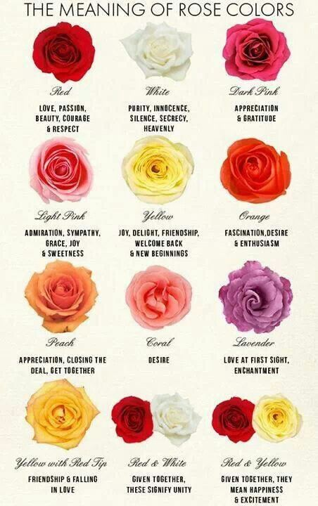 17 best ideas about rose color meanings on pinterest